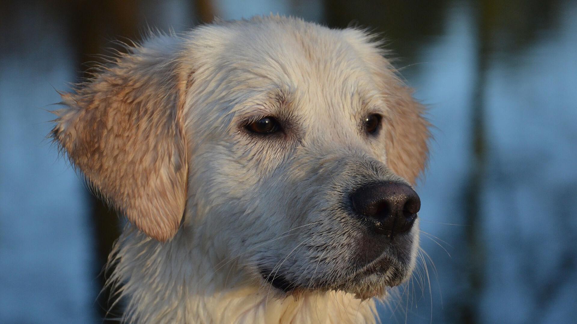 Tierkommunikation - mein Hund ist gestorben